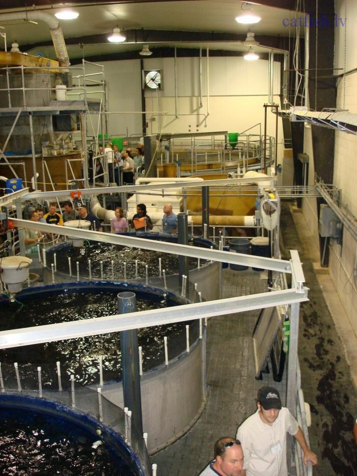 Выращивание рыбы в условиях замкнутого водоснабжения 100